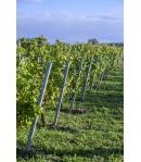 Metalen wijngaardpalen