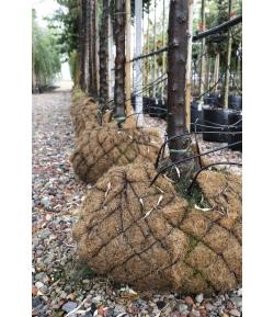 Kokos Biofolie kluitlap