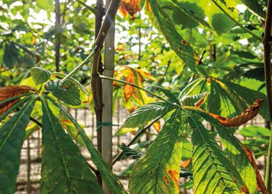 Palen, bamboe, steunen en afsluitingen