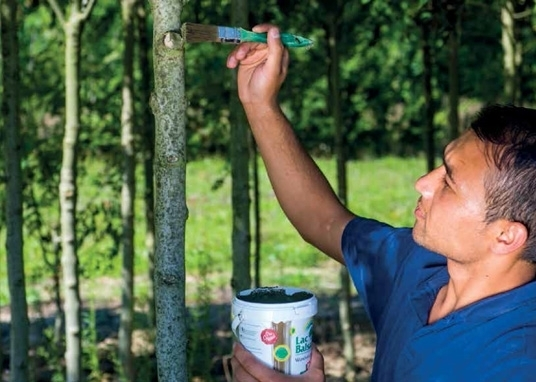 Boomverzorging en bodemverbeterende middelen