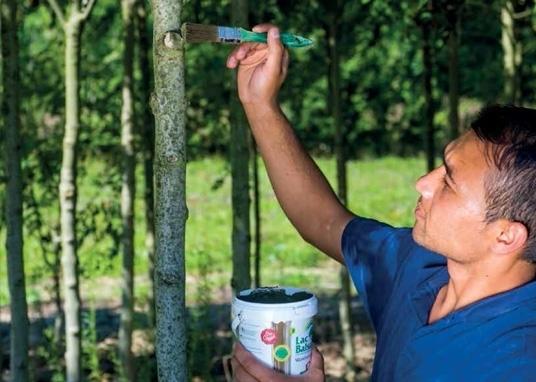 Soin des arbres et amendement organique du sol