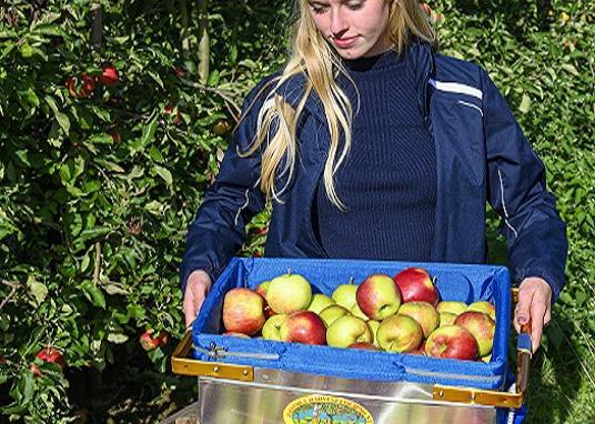 Pluk- en sorteermateriaal voor de fruitteelt